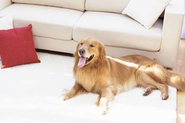老犬の介護と病気について